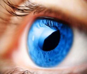 narzad-wzroku