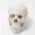 O drążących postrzałach czaszki